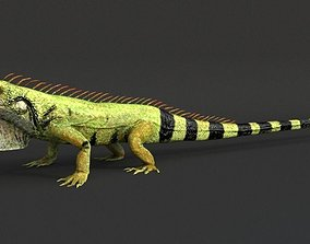 3D model Iguana