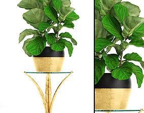 pot 3D model Ficus Lyrata Trees