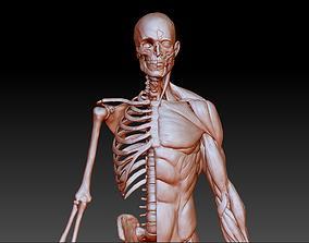 Anatomy Study 3D print model