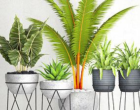 Plants collection pot 3D model birds-nest