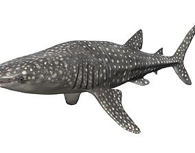 3D asset animated Whale Shark