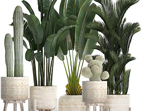 3D Collection of exotic plants in white pots 426