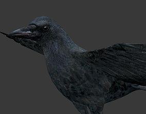 crow bird 3D model