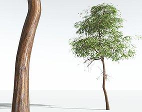 EVERYPlant Muira Puama 10 --15 Models-- 3D