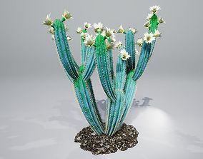 Cactus B2L 3D model