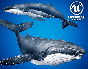 3D asset Humpback Whale for Unreal Engine