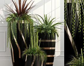 plant 43 Room plants 15 3D