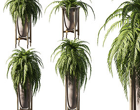 3D Fern in pots - 4 models
