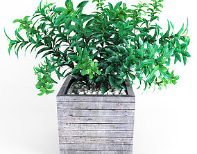 3D Plant tree 01