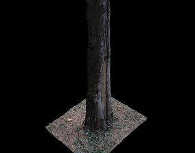 Tree P 3D model