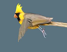 cardinal animated 3D