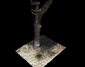 Tree X 3D