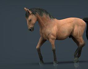 3D model realtime SPANISH HORSE