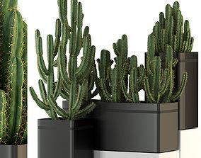 Plants collection 318 3D