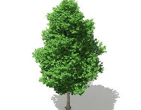 Ginkgo Tree Ginkgo biloba 7m 3D model