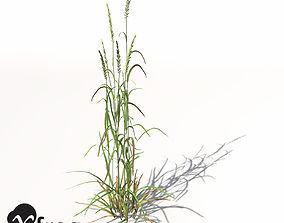 3D XfrogPlants Ryegrass