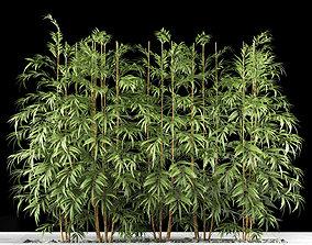 Bamboo plant plants 3D