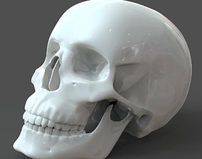 Human Skull model M3P1D1V1Skull