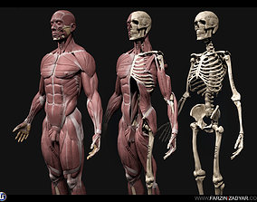 Human Anatomy Kit 3D asset low-poly
