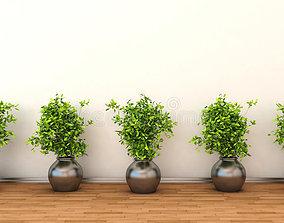 Simple interior plant 3D model