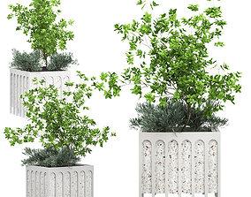 3D model Flower Pack 168