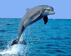 Dolphin 3D model beluga