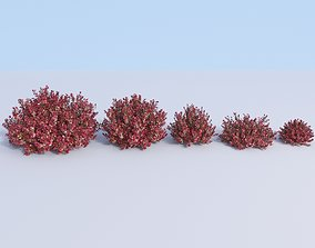 Japanese barberry Berberis thunbergii 3D model 1