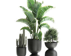 Houseplants in a black pot for the interior 915 3D