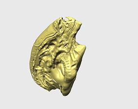 Newborn Alien - Alien Sapien - Head 3D print model