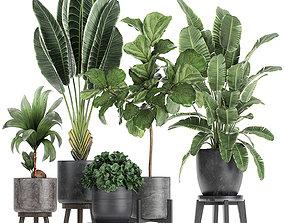 3D model Decorative plants in a black flowerpots 736