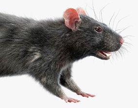 Rat Fur Black 3D