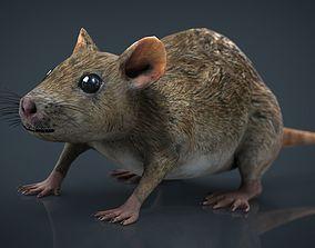 Realistic Rat 3D model