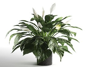 3D model lighting Peace Lily in Pot 2