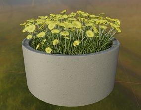 Concrete Pot 1500mm with Yellow Flowers Version 1 3D model