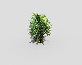 Shrub 3D asset game-ready herb
