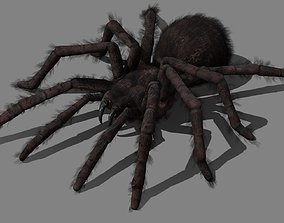 3D asset animated Spider - Tarantula with animations