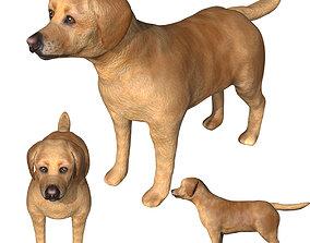 3D asset Labrador