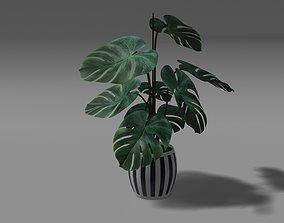 Flower plant 3d model pbr pot