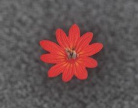 3D model Red Flower Blossom Version 1 - Object 32