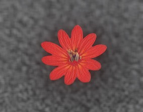 3D model Red Flower Blossom Version 1 - Object 32
