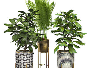 3D Potted plants Set 6