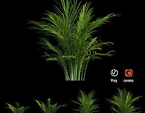 Majesty palm tree 3D model