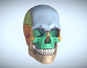 3D printable model Anatomical Human Skull