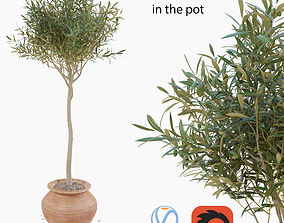 3D Olive tree in a pot