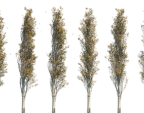 plant Poplar Pyramidal 17m Autumn 3D model