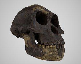 3D model Realistic Australopithecus Afarensis Lucy