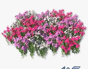 3D asset Catharanthus Roseus