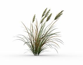 3D model nature Dry grass
