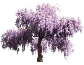 Flowering wisteria tree 3D model