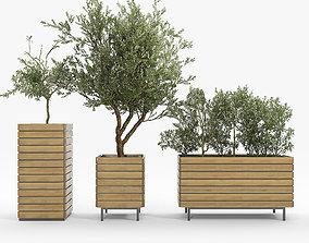 3D jasper rectangle planter Olea europaea